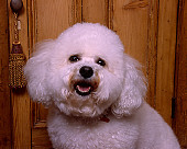 DOG 19 RK0132 04