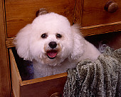 DOG 19 RK0133 01