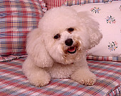 DOG 19 RK0135 04