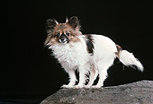 DOG 19 RK0144 12