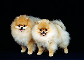 DOG 19 RS0024 01