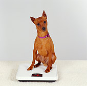 DOG 19 RS0042 01