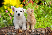 DOK 01 BK0001 01
