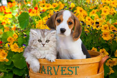 DOK 01 BK0003 01