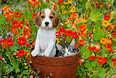 DOK 01 BK0004 01