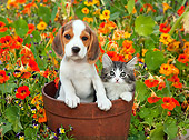 DOK 01 BK0005 01