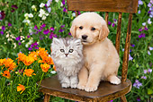 DOK 01 BK0006 01