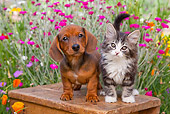 DOK 01 BK0008 01