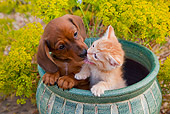 DOK 01 BK0010 01