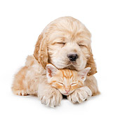 DOK 01 BK0011 01