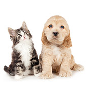DOK 01 BK0016 01