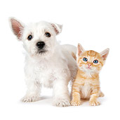DOK 01 BK0017 01