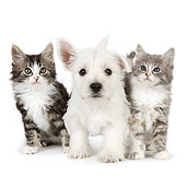 DOK 01 BK0018 01