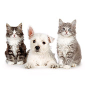 DOK 01 BK0019 01