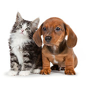 DOK 01 BK0020 01