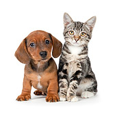 DOK 01 BK0022 01