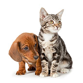 DOK 01 BK0023 01
