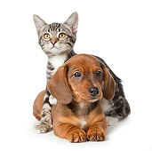 DOK 01 BK0025 01