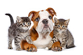 DOK 01 BK0045 01