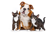 DOK 01 BK0046 01