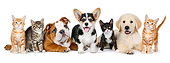 DOK 01 BK0051 01