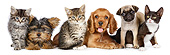 DOK 01 BK0057 01