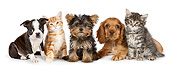 DOK 01 BK0065 01