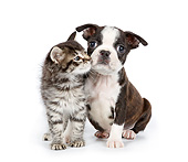 DOK 01 BK0077 01