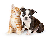 DOK 01 BK0080 01