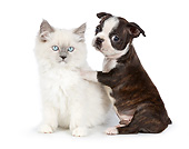 DOK 01 BK0082 01