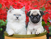 DOK 01 BK0087 01