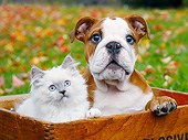 DOK 01 BK0088 01