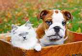 DOK 01 BK0089 01