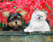 DOK 01 BK0090 01