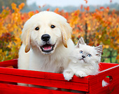 DOK 01 BK0091 01