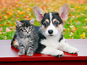 DOK 01 BK0095 01