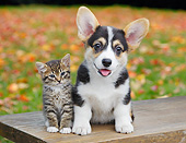 DOK 01 BK0096 01