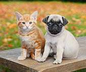 DOK 01 BK0098 01
