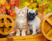 DOK 01 BK0100 01