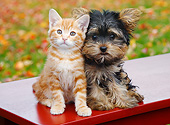 DOK 01 BK0103 01