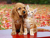 DOK 01 BK0108 01