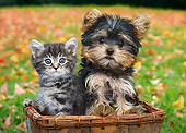 DOK 01 BK0111 01