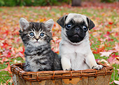 DOK 01 BK0112 01