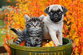 DOK 01 BK0113 01