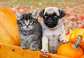 DOK 01 BK0115 01