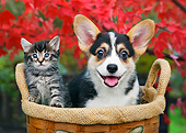 DOK 01 BK0116 01