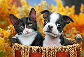 DOK 01 BK0117 01