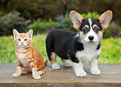 DOK 01 BK0119 01