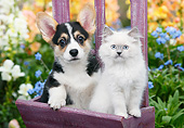 DOK 01 BK0121 01