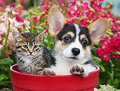 DOK 01 BK0122 01